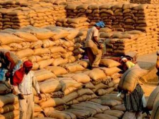 Center sent letter to Punjab-Haryana Order to purchase paddy from October 11